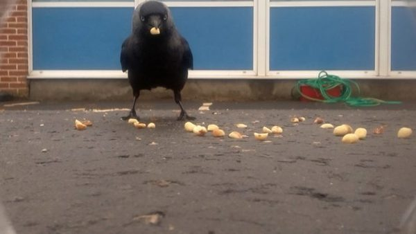 Un oiseau capturé avec une Nature Watch