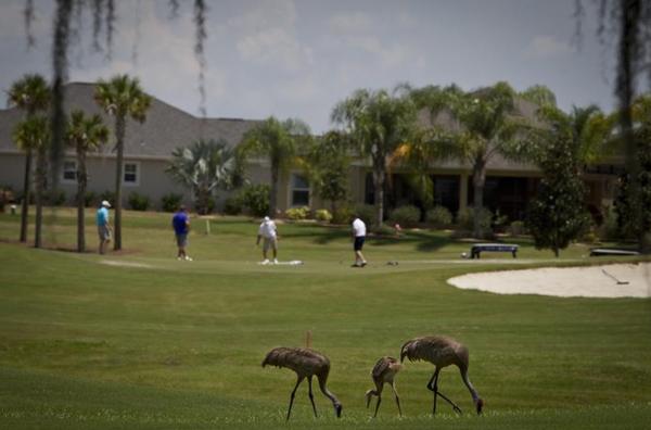 Gepensioneerden spelen golf in The Villages
