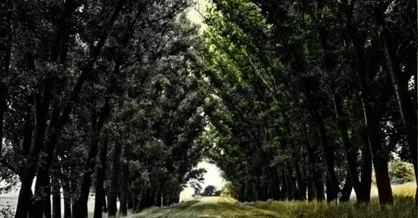 Dieses AI-Tool kann automatisch Schwarz-Weiß-Bilder nachkolorieren