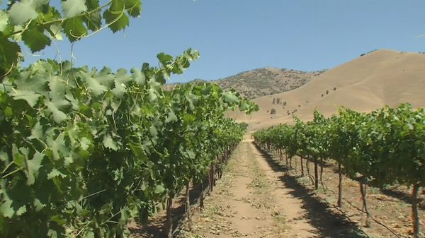 Tehachapi wine growers looking to be put on the map | KBAK