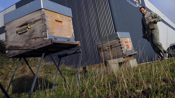 Pourquoi multiplier les ruches en ville n'est pas forcément une bonne idée - Waarom bijenkorven in de stad niet noodzakelijk een goed idee zijn
