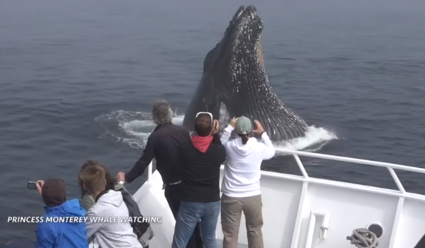 Humpback whales lunge toward California tour boat in shocking video | Fox News