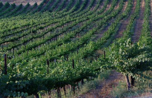 Wine and weed might not be allowed to mix in Temecula Valley – Press Enterprise