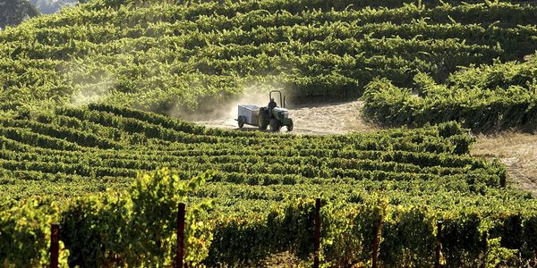 California Wine Has Radioactive Material from the Fukushima Nuclear Disaster, New Study Finds