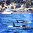 Watching Whales Die | The Tyee
