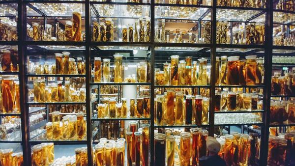 Piękna i zarazem straszna Mokra Kolekcja w Muzeum Historii Naturalnej w Berlinie przechowuje MILION spreparowanych zwierząt w 276 tys. słoi zajmujących półki o długości 12,6 km na trzech poziomach! Każdy z preparatów znajduje się w 70-proc. alkoholu. Dzięki temu naukowcy wciąż mogą je badać.