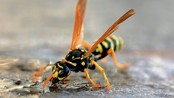 PSA: Drunk, Belligerent Wasps Are Terrorizing Beer Gardens