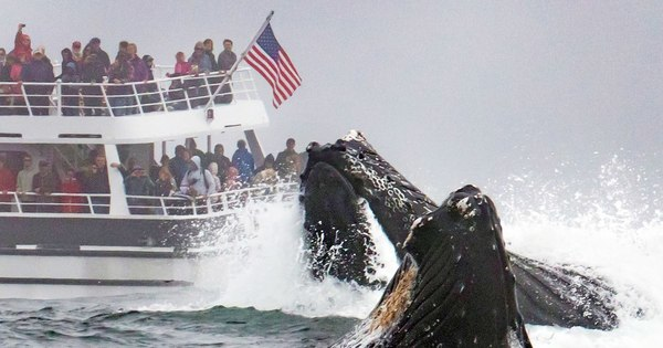 Humpback Whales Jump Close to Boat in Monterey | PEOPLE.com