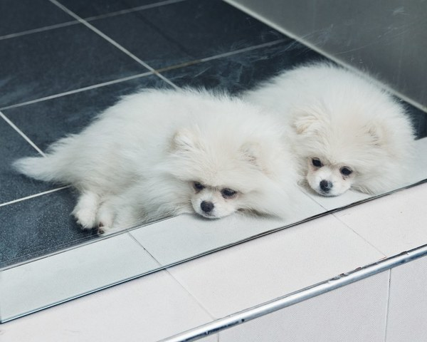 The Big, Controversial Business of Dog Cloning