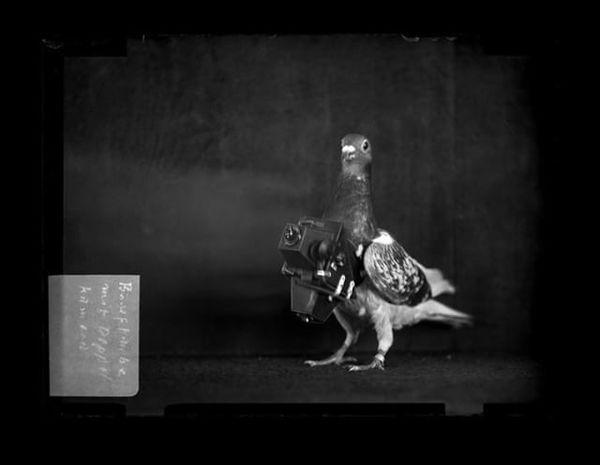 Pigeon camera (1907)