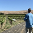 Can drones make better wine?