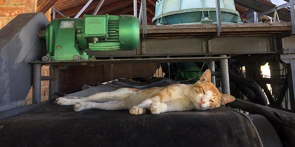 Een kat bij het dakpannen en bakstenenmuseum in Volos
