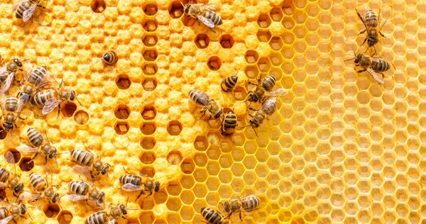 What Business Leaders Can Learn From Honeybees – Member Feature Stories – Medium