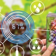 Applications open for SA Wine Industry Innovation Challenge