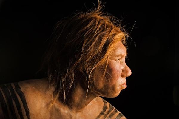 Matka neandertalka, ojciec denisowianin – odkryto hybrydę tych dwóch gatunków człowieka – Crazy Nauka