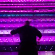 Food security: vertical farming sounds fantastic until you consider its energy use