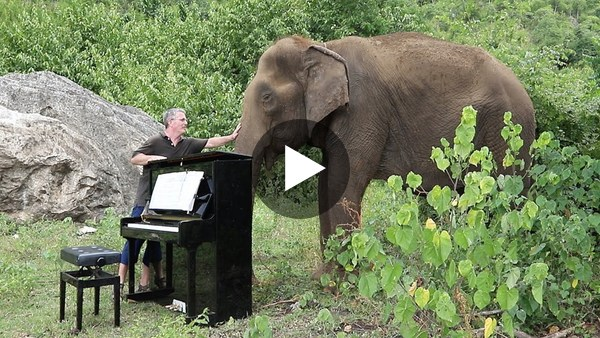 "Debussy ""Clair de Lune"" on Piano for 80 Year Old Elephant"