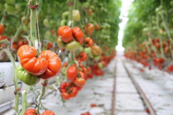 Qu'est-ce que le «Whole Food Plant-Based Diet» ?