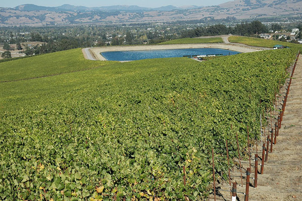 Turning Wastewater into Wine in Valle de Guadalupe | Wine Enthusiast Magazine