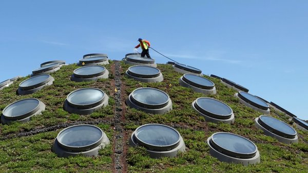 California Academy of Sciences' Living Roof still thriving after 10 years  | abc7news.com