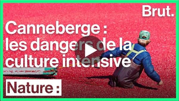 L'impact de la production intensive de canneberge - YouTube