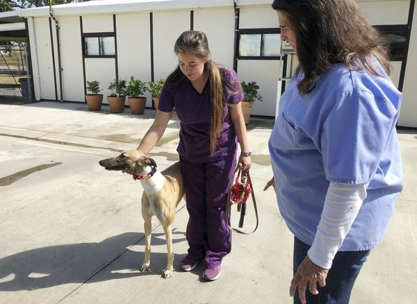 California canine blood bank disputes PETA abuse claims | Pueblo Chieftain