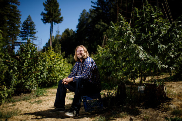 California cannabis seeks own horticultural identity
