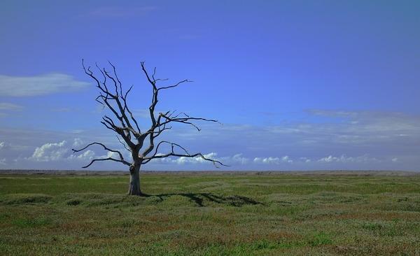Próg bezpieczeństwa dla klimatu to 1,5˚C – osiągniemy go do 2052 roku – Crazy Nauka