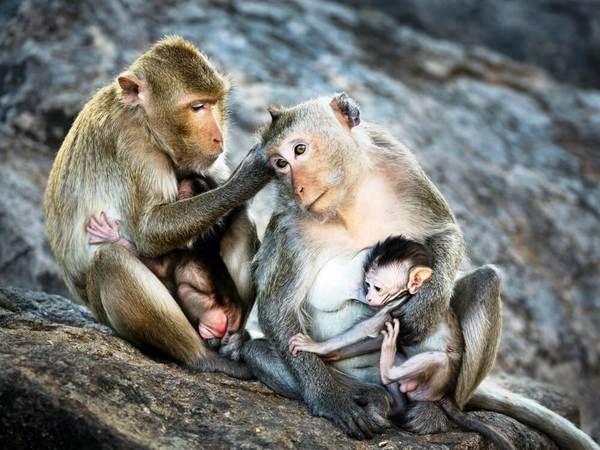 In het hart van de natuur. Op zoek naar apen.