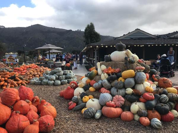 Things to Do in Monterey this Weekend: October 26-28, 2018