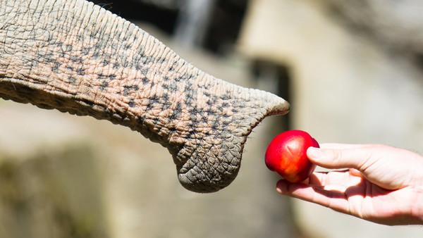 Wie Elefante auch kleine Teile hochheben können