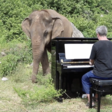 Paul Barton plays piano to soothe ailing, blind elephants at sanctuary in Thailand
