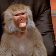 Lees hier het verhaal achter de office monkey gifs