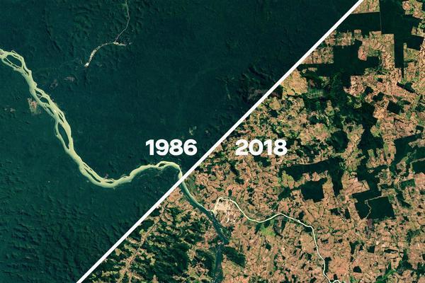 Was unter Jair Bolsonaro mit dem Regenwald passieren wird
