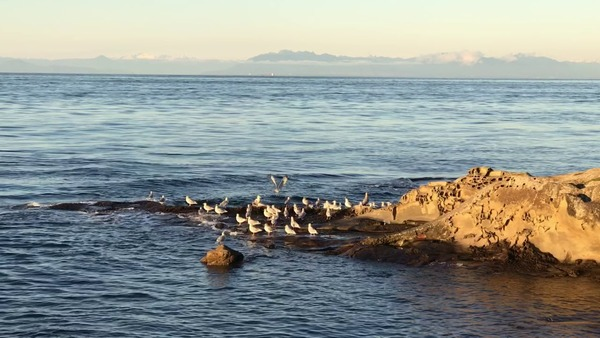 A Mayne Island Minute by Terrill Welch - YouTube