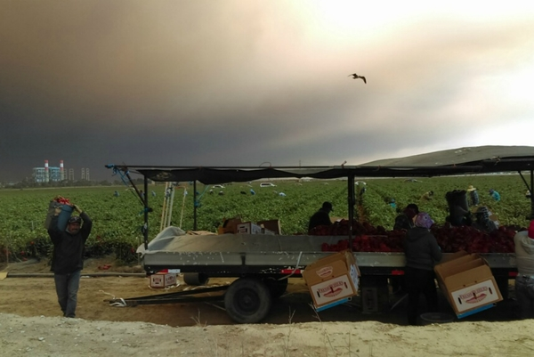 Inside the Struggle of Farmworks Working Through Wildfires