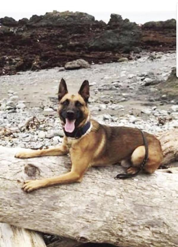 Sutter County police dog slain in suspect pursuit | News | appeal-democrat.com