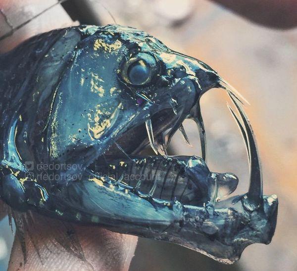 Teeth. Terrible teeth - Credit: Roman Fedortsov