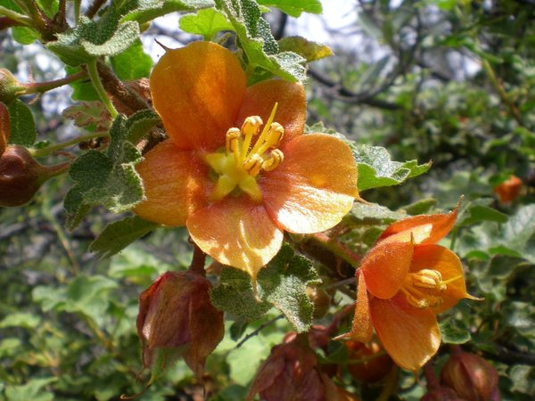 Take a hike with El Dorado Chapter, California Native Plant Society