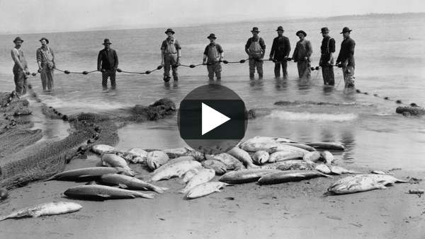 How we killed off the giant salmon of the Pacific Northwest in 50 years on Vimeo