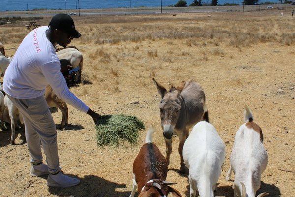 That time we thought feeding goats might improve our KPIs.