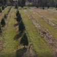 Drone footage of Chipley Christmas tree farm impacted by Hurricane Michael