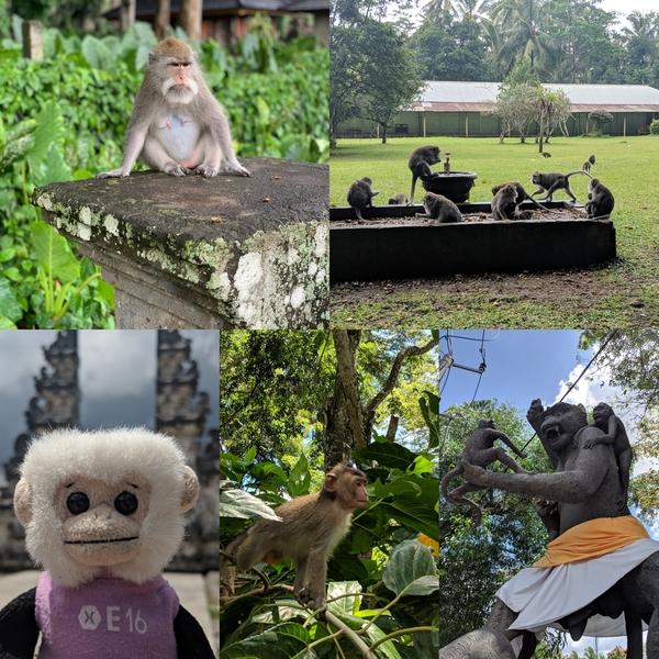 Monos of Bali