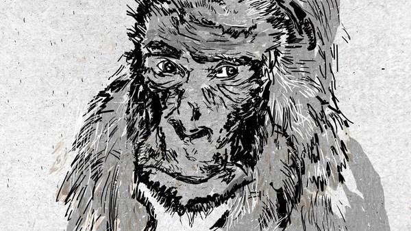Diese Dokumentation zeigt das Leben eines der ältesten Gorillas der Welt