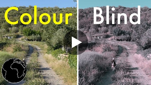 How Color Blindness Works