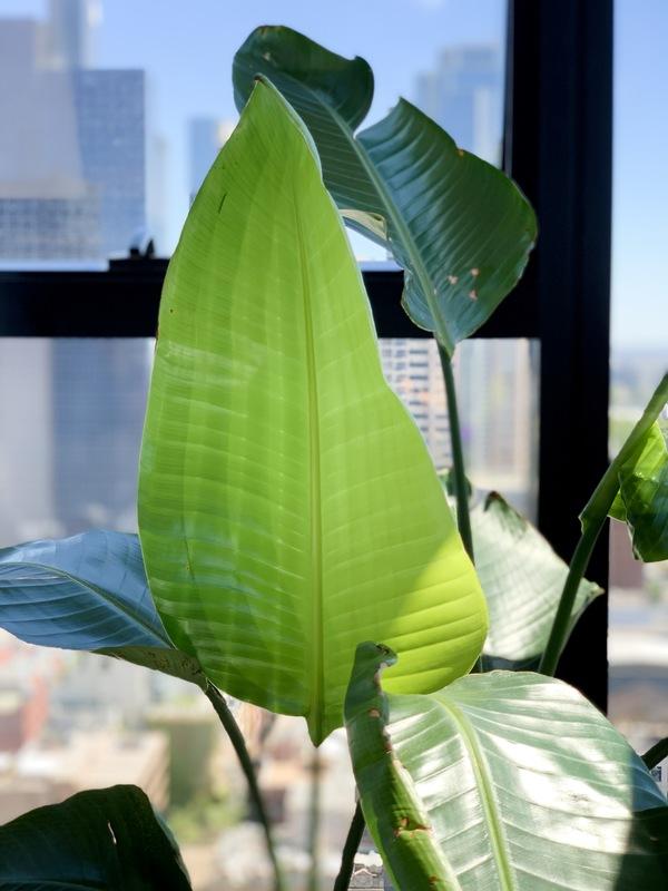 Happy leafy!