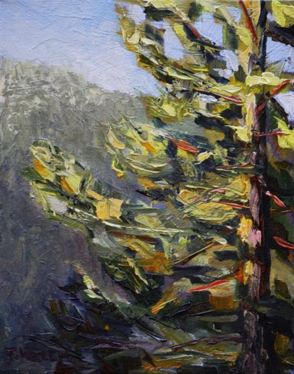 Morning Greets Fir Tree Study by Terrill Welch | Artwork Archive