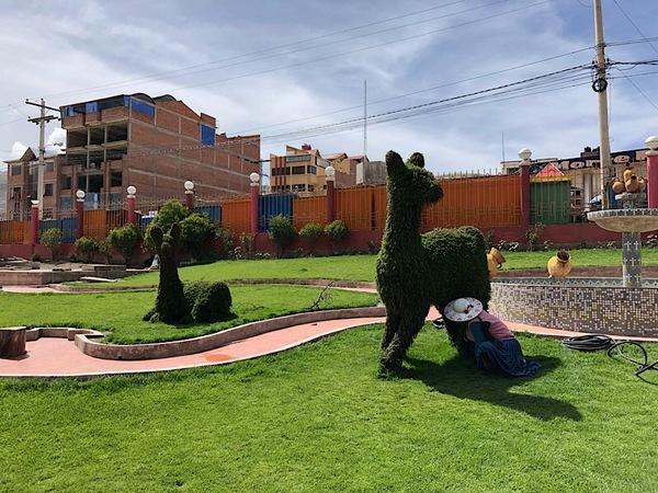 Lama's knippen bij het busstation van Potosí