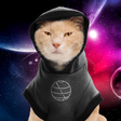 The Hitchhiking Cat's Guide to Getting a Job in Quantum Computing