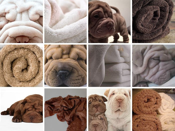 Dogs or Towels?  Humans can easily tell the difference.